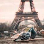 Paris, Francia / Foto: Fabrizio Verrecchia (unsplash)