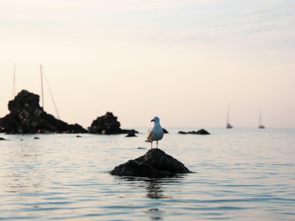 Menorca, Islas Baleares / Foto: Mor Shani-(unsplash)