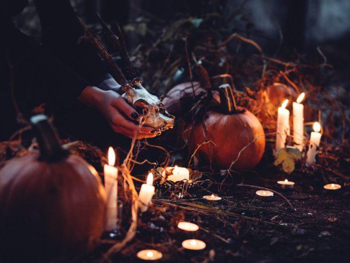 Halloween / Foto: freestocks.org (unsplash)