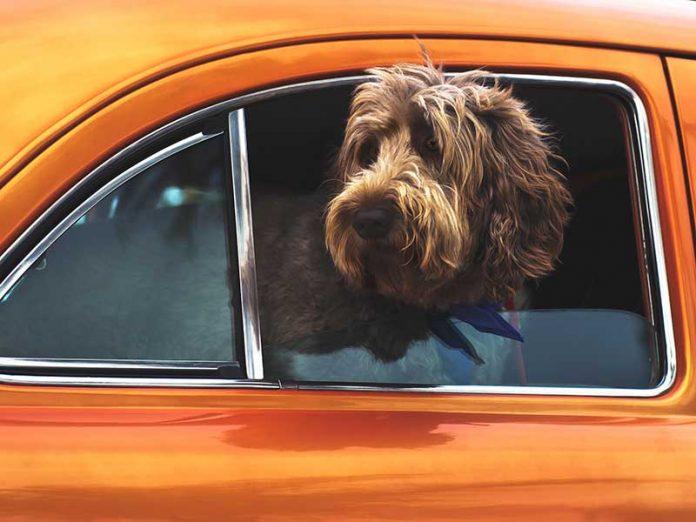 Accesorios de viajes con mascota / Foto: Tim Mossholder (unsplash)