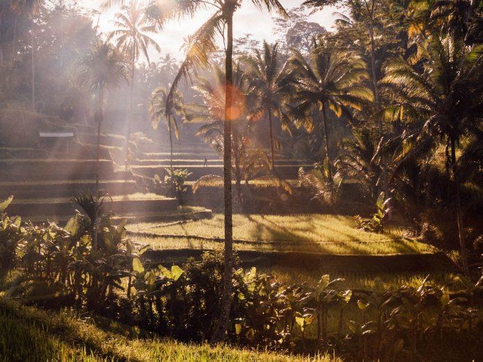 Tegallalang, Bali, Indonesia / Foto: Patrick Craig (unsplash)