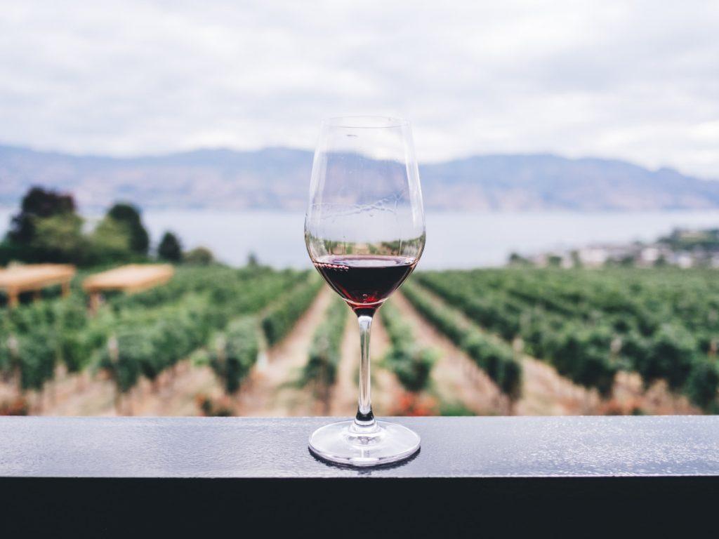 Bodegas y vinos / Foto: Kym Ellis (unsplash)